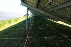 Blog_Port_of_Oakland_Solar_Clearing_04